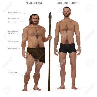 50519011-digital-illustration-and-render-of-a-neanderthal-man