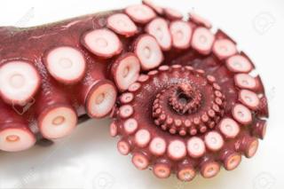 71228349-close-up-of-octopus-leg